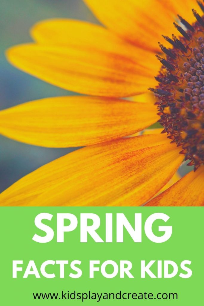 Spring facts for kids
